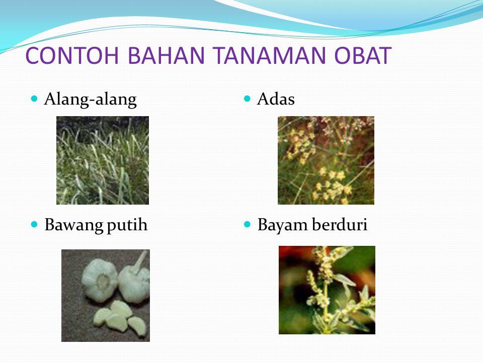 Alang-alang Bawang putih Adas Bayam berduri