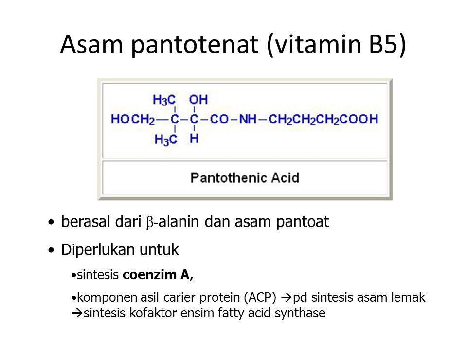 Asam pantotenat (vitamin B5) berasal dari β- alanin dan asam pantoat Diperlukan untuk sintesis coenzim A, komponen asil carier protein (ACP)  pd sintesis asam lemak  sintesis kofaktor ensim fatty acid synthase