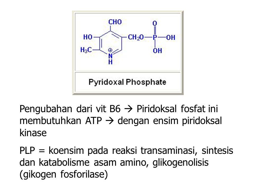 Pengubahan dari vit B6  Piridoksal fosfat ini membutuhkan ATP  dengan ensim piridoksal kinase PLP = koensim pada reaksi transaminasi, sintesis dan katabolisme asam amino, glikogenolisis (gikogen fosforilase)