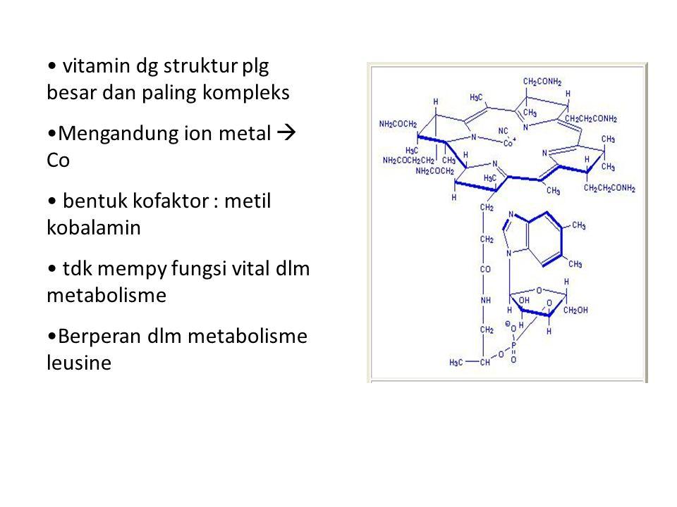 vitamin dg struktur plg besar dan paling kompleks Mengandung ion metal  Co bentuk kofaktor : metil kobalamin tdk mempy fungsi vital dlm metabolisme Berperan dlm metabolisme leusine