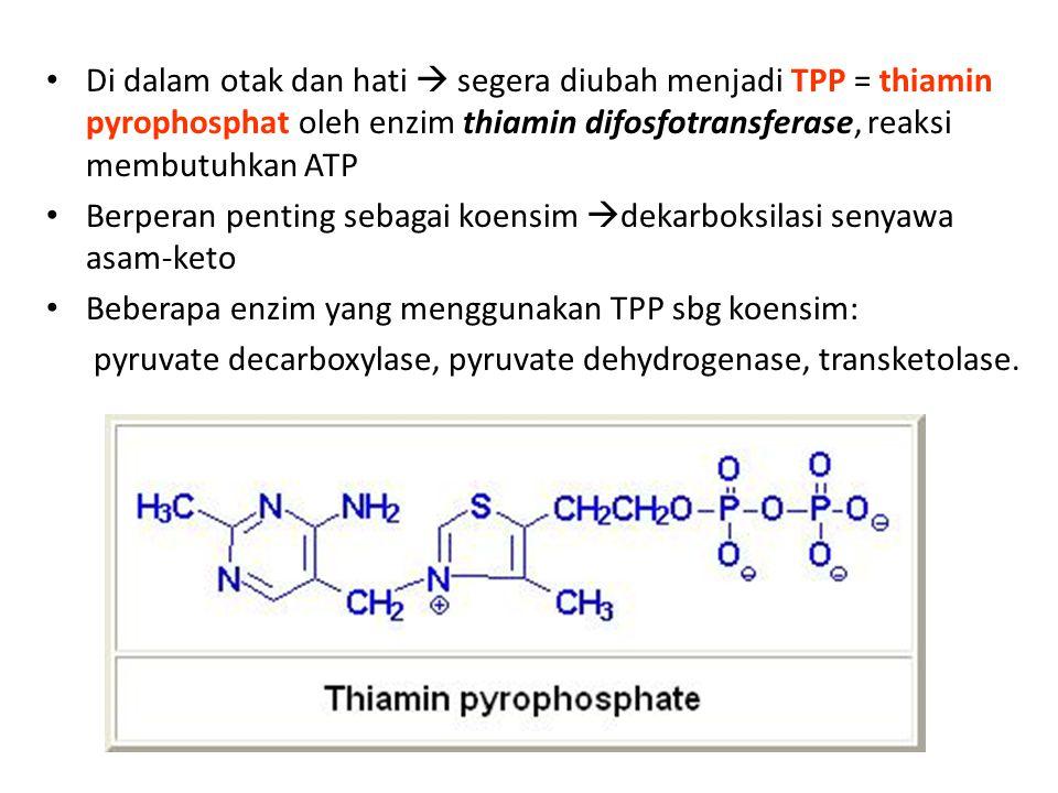 Di dalam otak dan hati  segera diubah menjadi TPP = thiamin pyrophosphat oleh enzim thiamin difosfotransferase, reaksi membutuhkan ATP Berperan penting sebagai koensim  dekarboksilasi senyawa asam-keto Beberapa enzim yang menggunakan TPP sbg koensim: pyruvate decarboxylase, pyruvate dehydrogenase, transketolase.