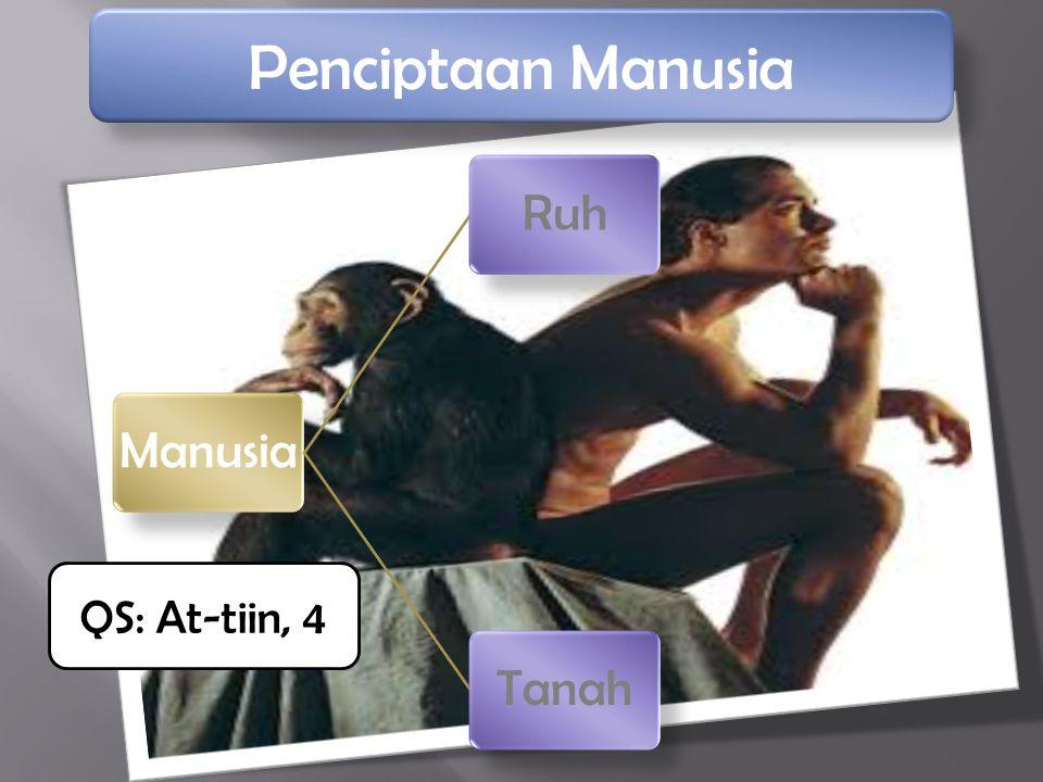 ManusiaRuhTanah Penciptaan Manusia QS: At-tiin, 4