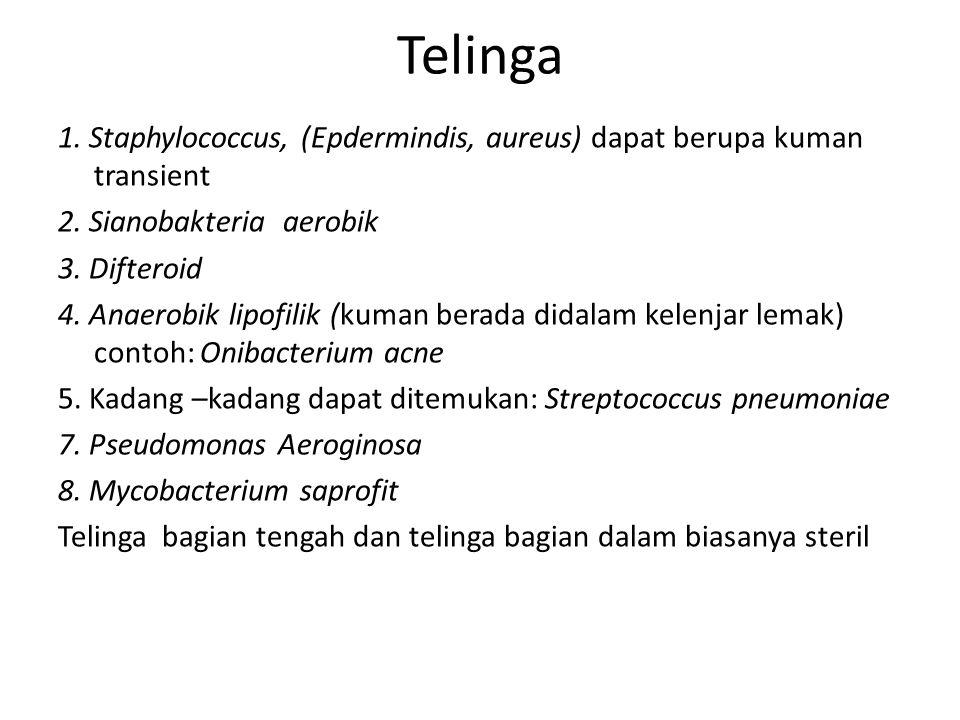Telinga 1. Staphylococcus, (Epdermindis, aureus) dapat berupa kuman transient 2. Sianobakteria aerobik 3. Difteroid 4. Anaerobik lipofilik (kuman bera
