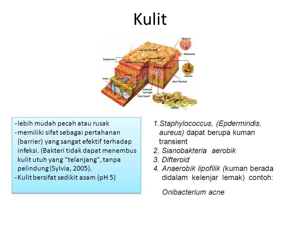 Kulit -lebih mudah pecah atau rusak -memiliki sifat sebagai pertahanan (barrier) yang sangat efektif terhadap infeksi. (Bakteri tidak dapat menembus k