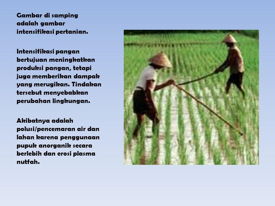Gambar di samping adalah gambar intensifikasi pertanian. Intensifikasi pangan bertujuan meningkatkan produksi pangan, tetapi juga memberikan dampak ya