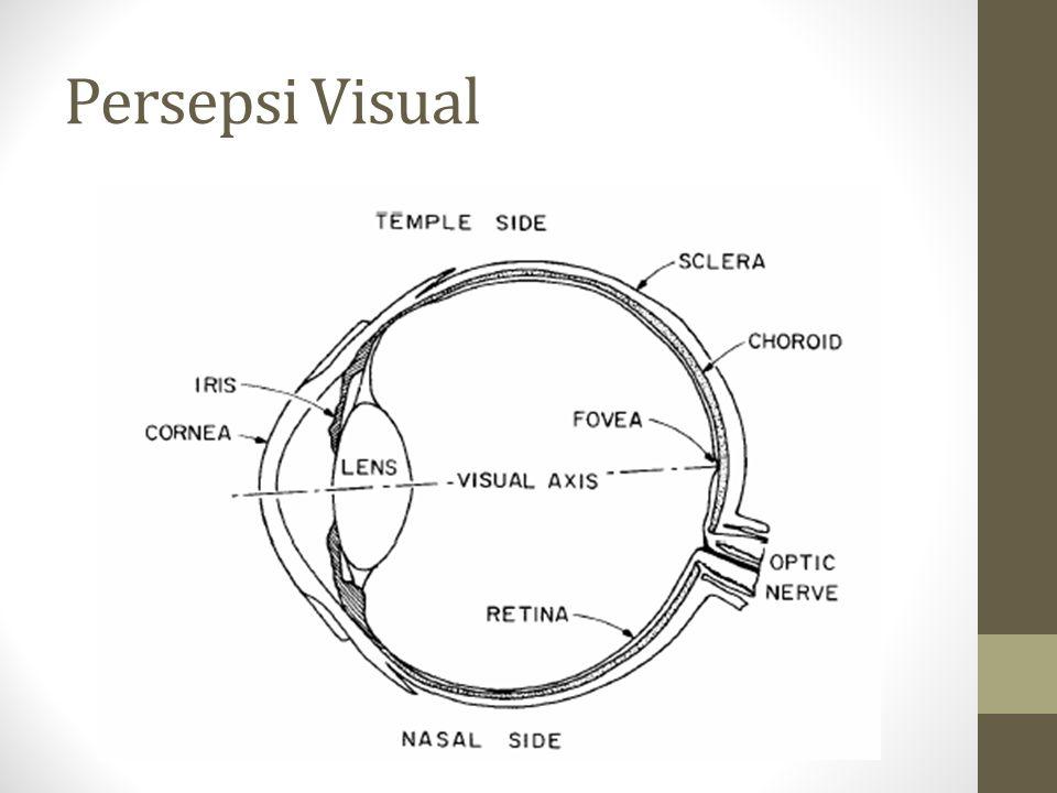 Persepsi Visual