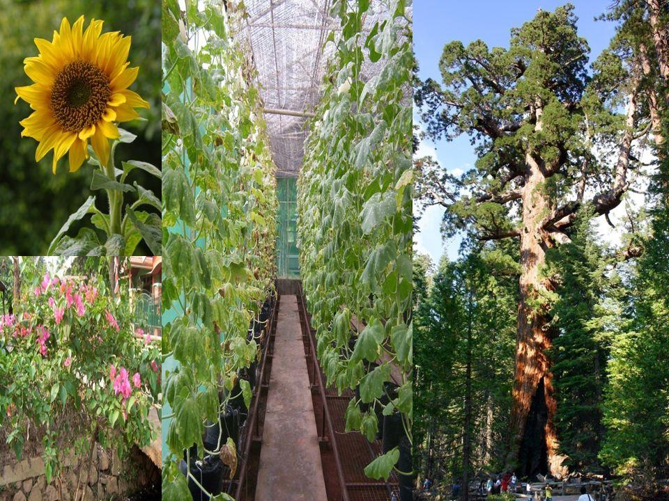 K LASIFIKASI T UMBUHAN P AKU Berdasarkan bentuk dan ukuran spora, tumbuhan paku dapat dibedakan menjadi : 1.