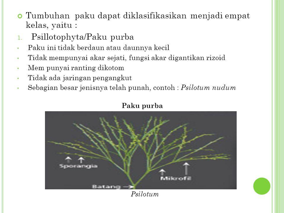 Tumbuhan paku dapat diklasifikasikan menjadi empat kelas, yaitu : 1. Psillotophyta/Paku purba Paku ini tidak berdaun atau daunnya kecil Tidak mempunya