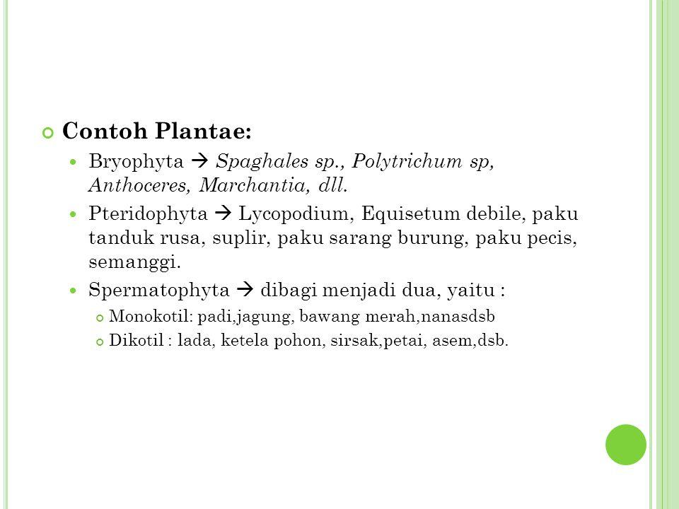 C ONTOH - CONTOH TUMBUHAN MONOKOTIL Eichornia Canna Cyperus Cymbidium