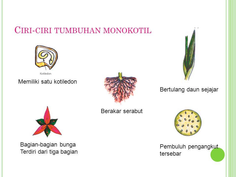 C IRI - CIRI TUMBUHAN MONOKOTIL Memiliki satu kotiledon Bagian-bagian bunga Terdiri dari tiga bagian Berakar serabut Bertulang daun sejajar Pembuluh p