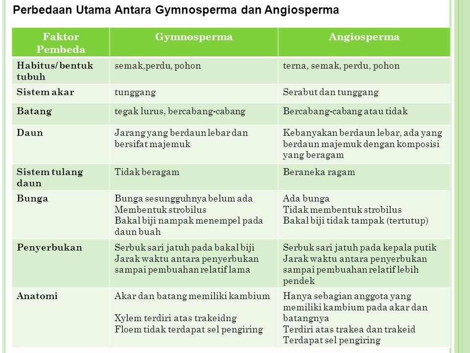 Faktor Pembeda GymnospermaAngiosperma Habitus/ bentuk tubuh semak,perdu, pohonterna, semak, perdu, pohon Sistem akar tunggangSerabut dan tunggang Bata