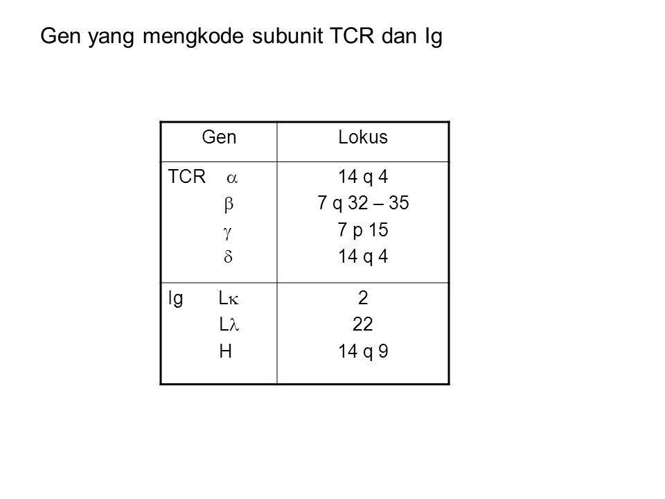 Gen yang mengkode subunit TCR dan Ig GenLokus TCR     14 q 4 7 q 32 – 35 7 p 15 14 q 4 Ig L  L H 2 22 14 q 9