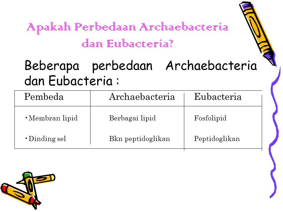 CIRI-CIRI ARCHAEBACTERIA Archaebacteria merupakan kelompok bakteri yang pertama muncul di bumi.