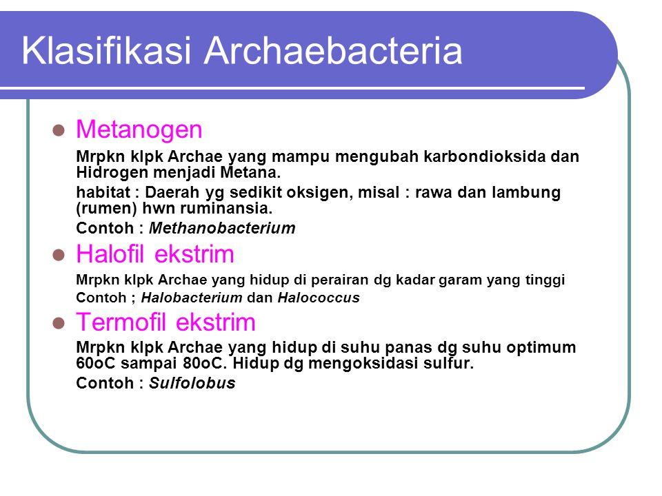 EUBACTERIA Eubacteria atau dikenal juga Bakteri sebenarnya.
