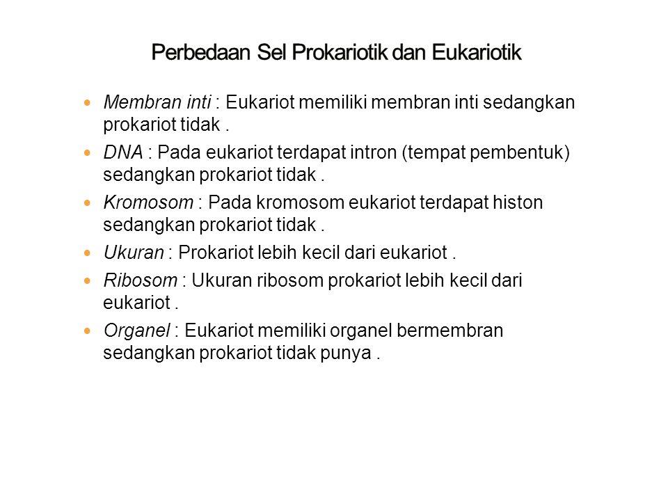 Membran inti : Eukariot memiliki membran inti sedangkan prokariot tidak. DNA : Pada eukariot terdapat intron (tempat pembentuk) sedangkan prokariot ti