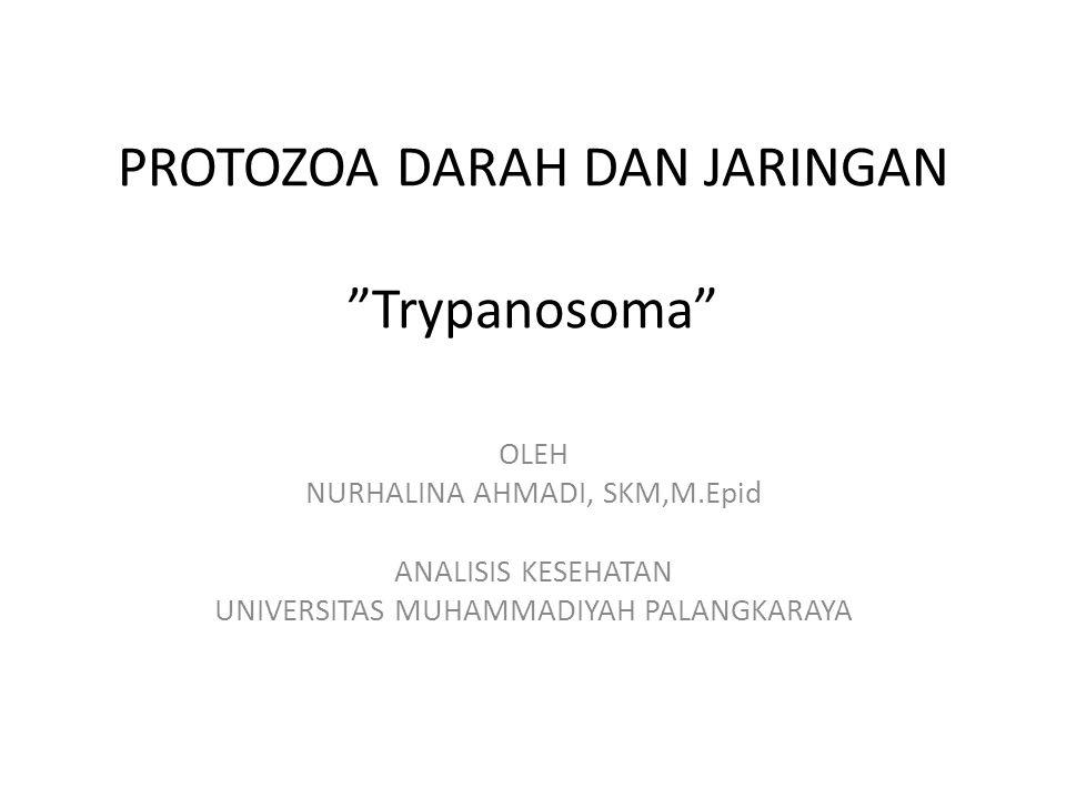 "PROTOZOA DARAH DAN JARINGAN ""Trypanosoma"" OLEH NURHALINA AHMADI, SKM,M.Epid ANALISIS KESEHATAN UNIVERSITAS MUHAMMADIYAH PALANGKARAYA"
