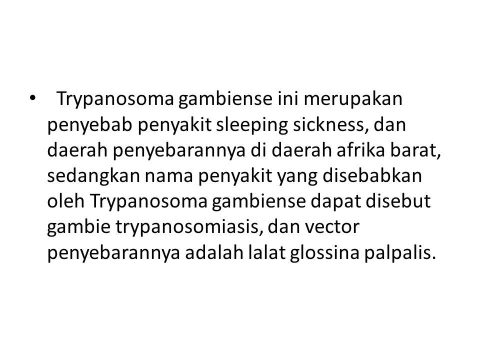 Trypanosoma gambiense ini merupakan penyebab penyakit sleeping sickness, dan daerah penyebarannya di daerah afrika barat, sedangkan nama penyakit yang