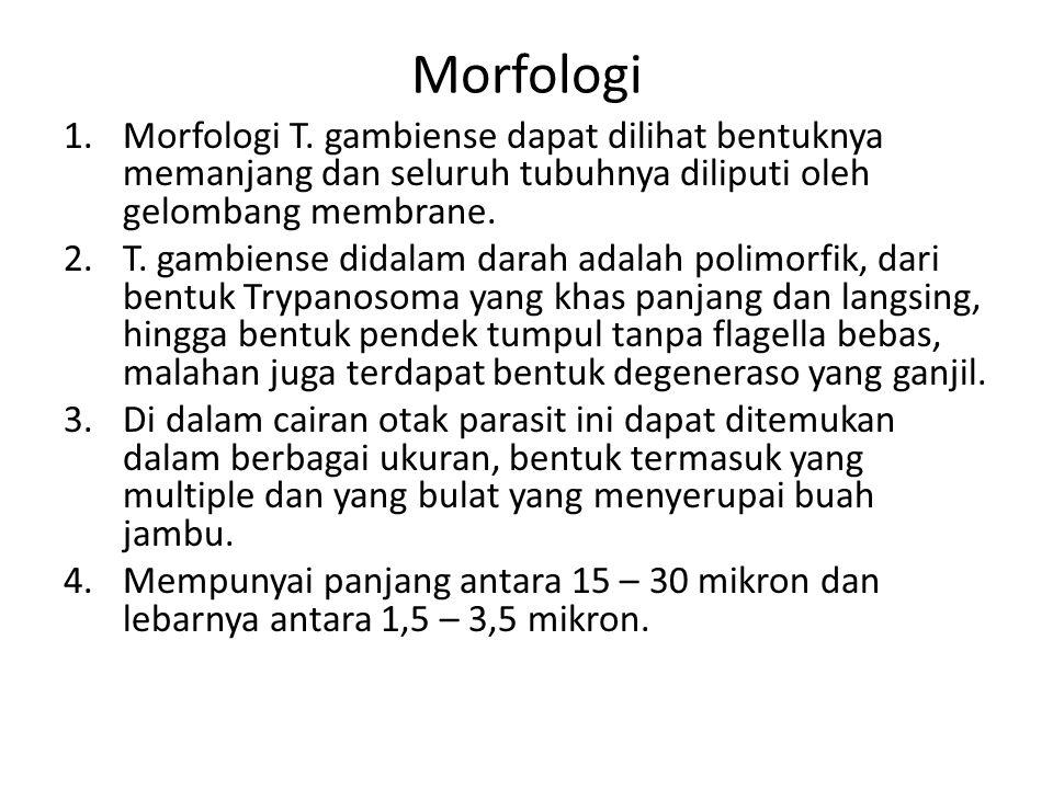 Morfologi 1.Morfologi T. gambiense dapat dilihat bentuknya memanjang dan seluruh tubuhnya diliputi oleh gelombang membrane. 2.T. gambiense didalam dar