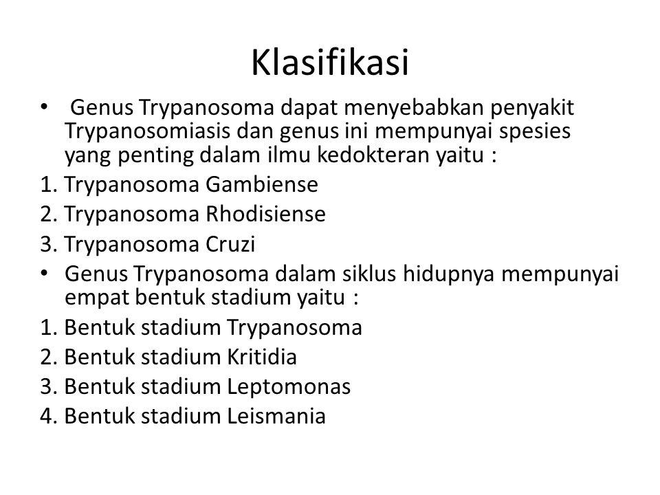 Gbr. Trypanosoma Cruze dan vektor