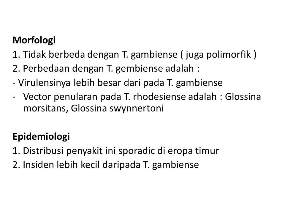 Morfologi 1. Tidak berbeda dengan T. gambiense ( juga polimorfik ) 2. Perbedaan dengan T. gembiense adalah : - Virulensinya lebih besar dari pada T. g