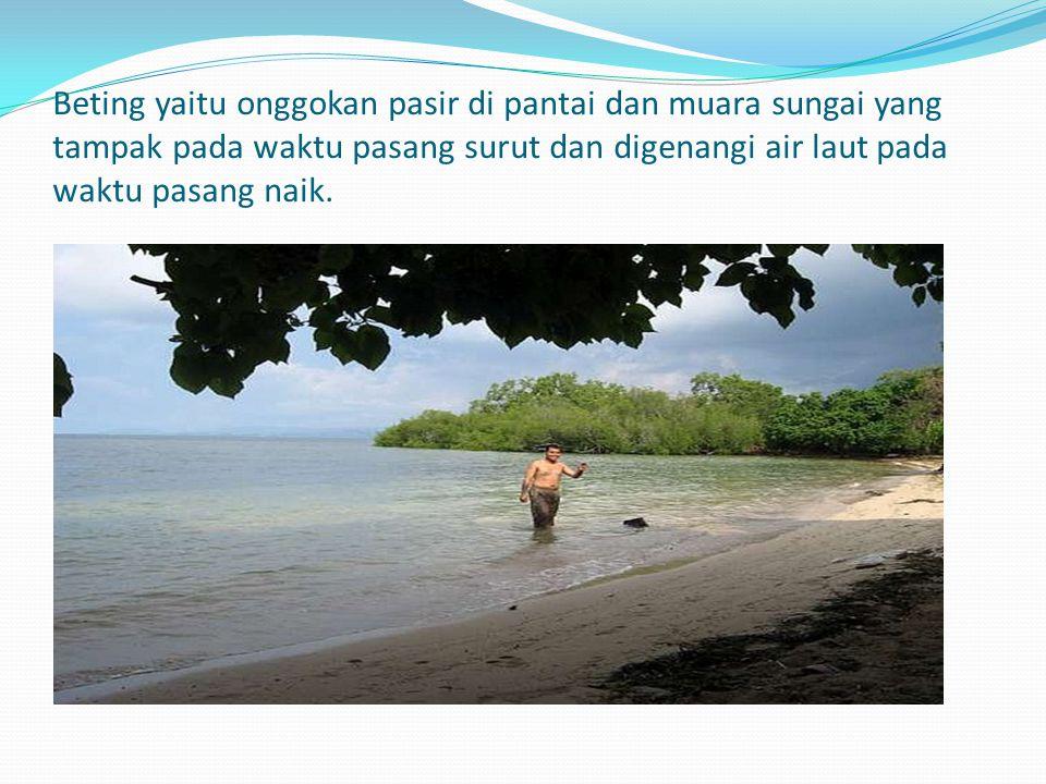 Beting yaitu onggokan pasir di pantai dan muara sungai yang tampak pada waktu pasang surut dan digenangi air laut pada waktu pasang naik.
