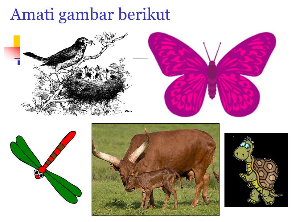 Mengapa Hewan Berkembang biak.Hewan berkembang biak agar mereka dapat melestarikan keturunannya.