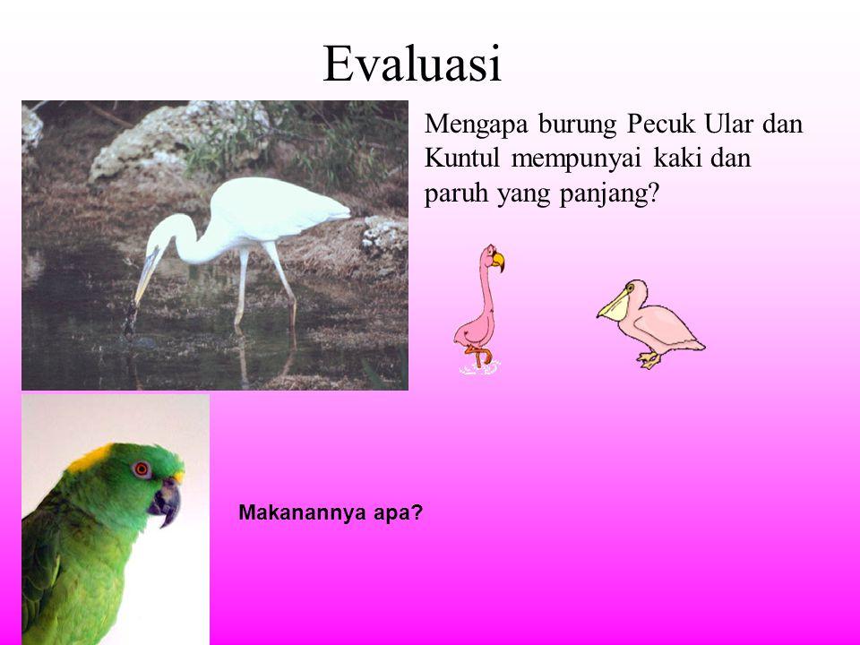 Evaluasi Mengapa burung Pecuk Ular dan Kuntul mempunyai kaki dan paruh yang panjang.