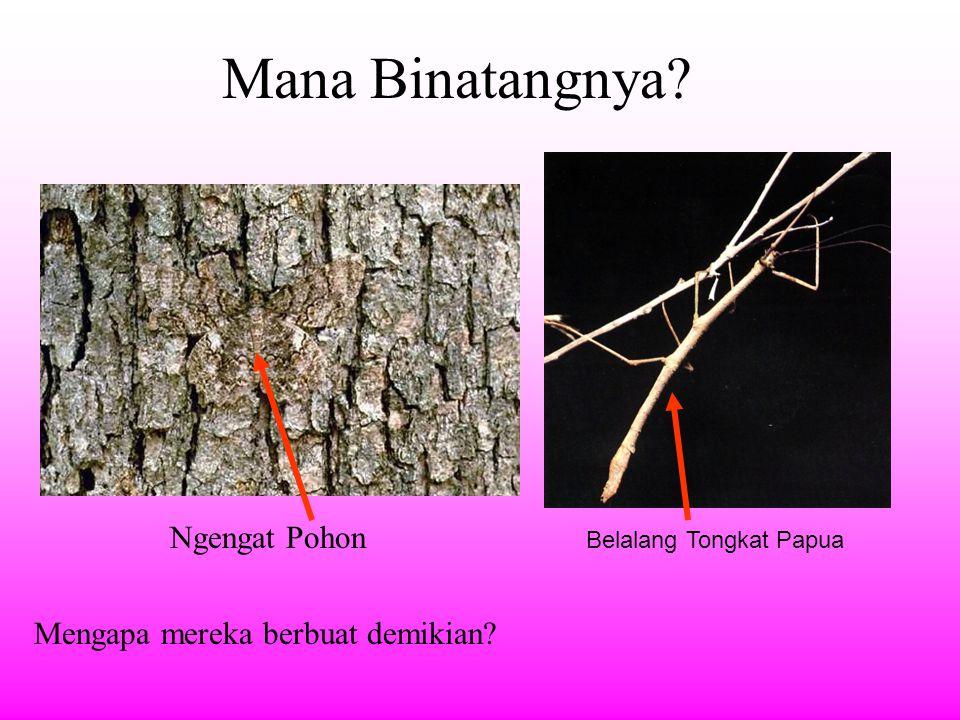 Macam Adaptasi Adaptasi terhadap habitat/lingkungan-nya Adaptasi bentuk tubuh terhadap makanan-nya (adaptasi morfologis) Adaptasi untuk pertahanan diri maupun menangkap mangsa