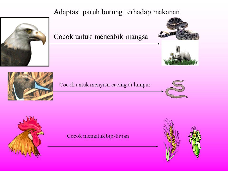 Adaptasi paruh burung terhadap makanan Cocok untuk mencabik mangsa Cocok untuk menyisir cacing di lumpur Cocok mematuk biji-bijian