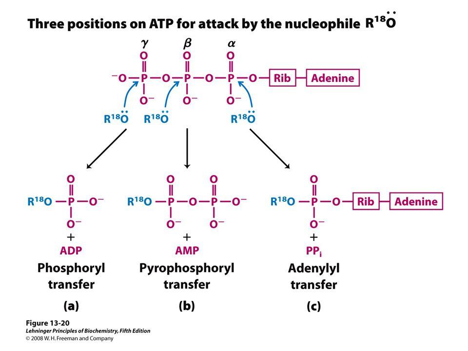 KI3061Zeily Nurachman32 ATP → cahaya