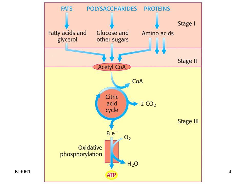 KI3061Zeily Nurachman5 Kategori metabolisme 1.Katabolisme (degradasi): penguraian molekul organik kompleks (karbohidrat, lemak, dan protein) menjadi molekul lebih sederhana dan kecil (asam laktat, CO 2, NH 3 ) → melepas energi (ATP, NADH, NADPH, FADH 2 ) 2.Anabolisme (biosintesis): pembentukan molekul organik kompleks dari molekul anorganik sederhana → memerlukan energi (ATP, NADH, NADPH, FADH 2 )