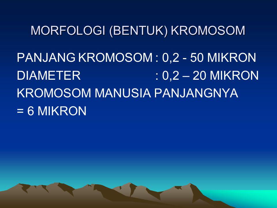 MORFOLOGI (BENTUK) KROMOSOM PANJANG KROMOSOM: 0,2 - 50 MIKRON DIAMETER: 0,2 – 20 MIKRON KROMOSOM MANUSIA PANJANGNYA = 6 MIKRON