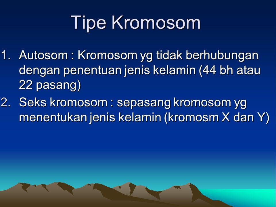 Tipe Kromosom 1.Autosom : Kromosom yg tidak berhubungan dengan penentuan jenis kelamin (44 bh atau 22 pasang) 2.Seks kromosom : sepasang kromosom yg m