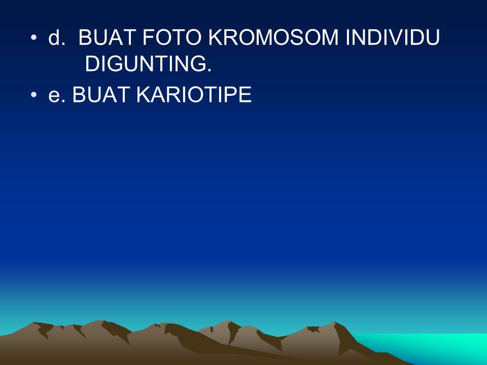 d. BUAT FOTO KROMOSOM INDIVIDU DIGUNTING. e. BUAT KARIOTIPE