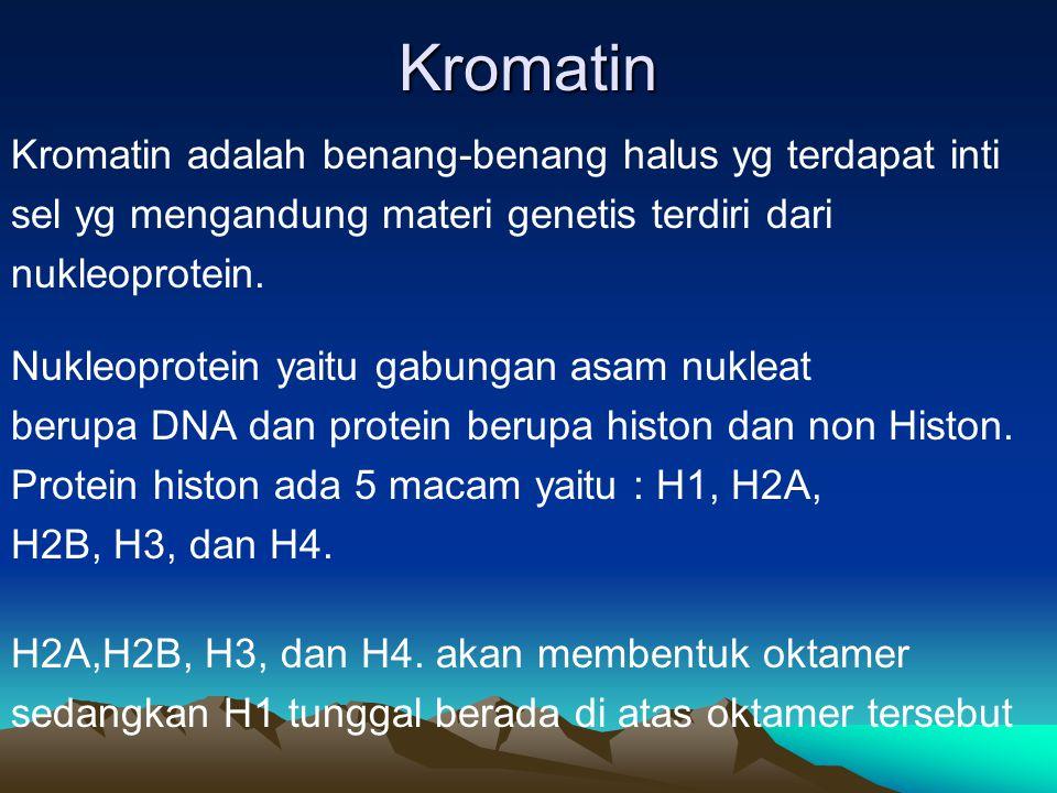 Kromosom  Terdapat didalam nukleus  Bentuk seperti batang bengkok  Terdiri dari zat yg mudah mengikat warna  Zat yg menyusunnya disebut kromatin  Jumlah kromosom manusia 46