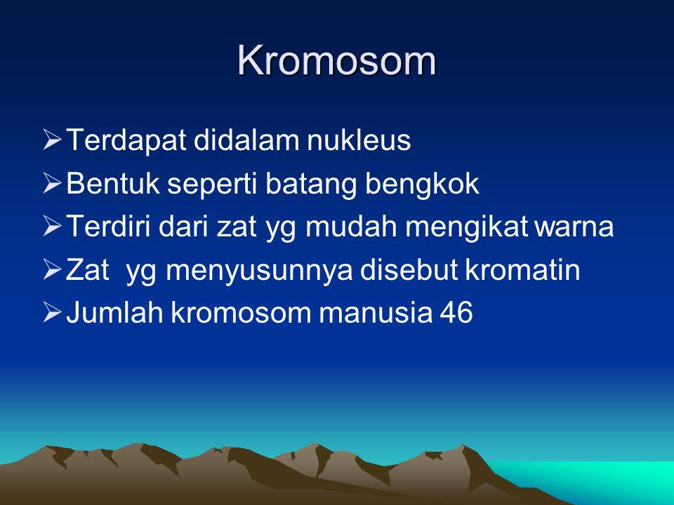 Struktur kromosom 1.Kromonema : Pita berbentuk spiral 2.Kromomer : Kromonema yg mempunyai penebalan – penebalan dibeberapa tempat 3.Sentromer : didalamnya terdapat granula kecil yg dinamakan sferil 4.Lekukan kedua : Tempat terbentuknya nukleolus 5.Telomer : Bagian dari ujung kromosom yg menghalagi bersambungnya kromosom satu dengan yg lain 6.Satelit