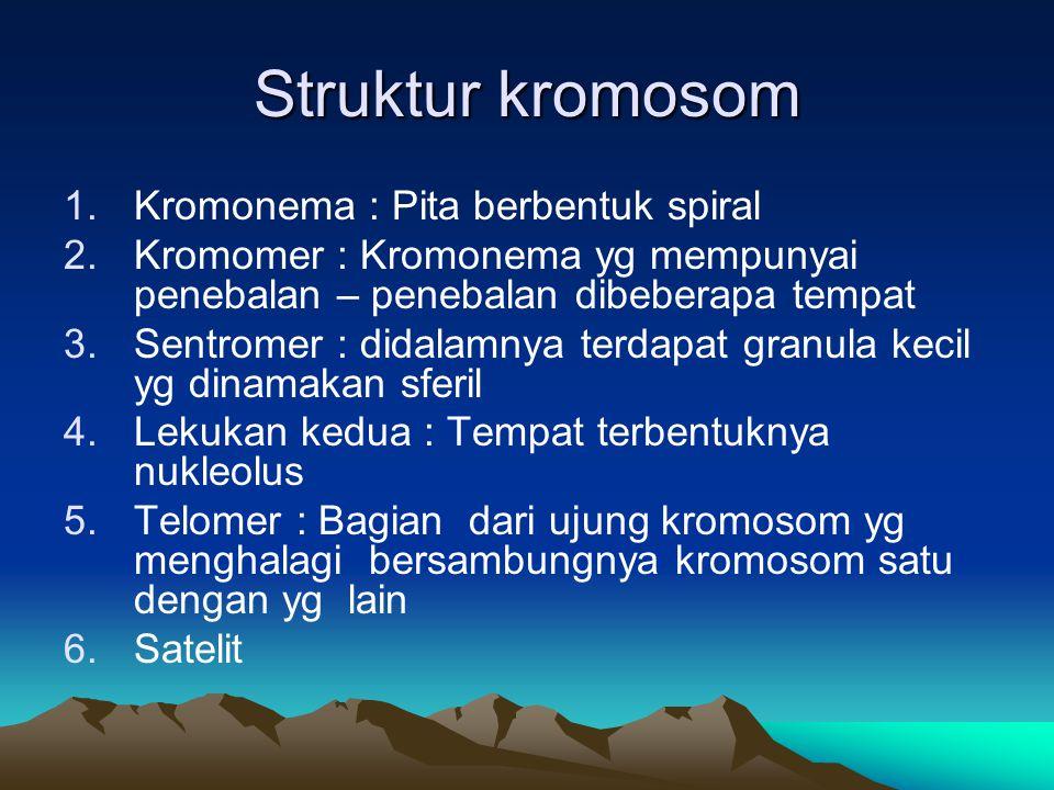 Struktur kromosom 1.Kromonema : Pita berbentuk spiral 2.Kromomer : Kromonema yg mempunyai penebalan – penebalan dibeberapa tempat 3.Sentromer : didala