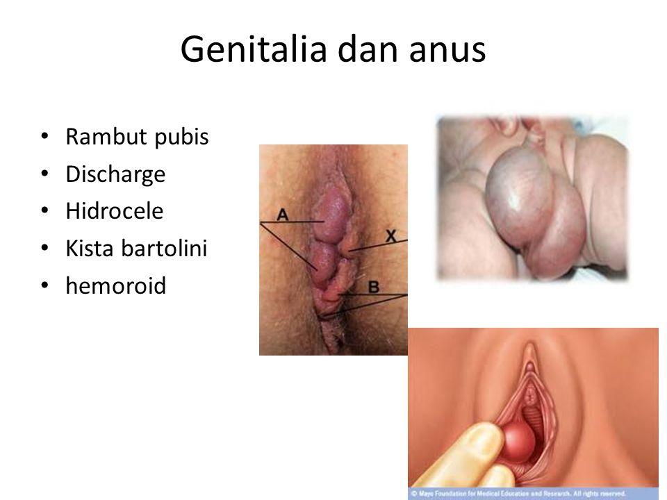 Genitalia dan anus Rambut pubis Discharge Hidrocele Kista bartolini hemoroid