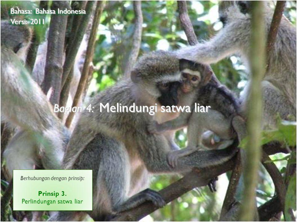 ©2009 RainHutan Alliance Bagian 4: Melindungi satwa liar Bahasa: Bahasa Indonesia Versi: 2011 Berhubungan dengan prinsip: Prinsip 3. Perlindungan satw
