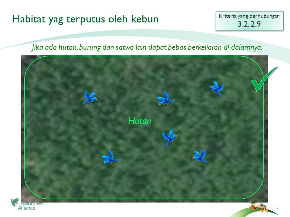 14 Habitat yag terputus oleh kebun Kriteria yang berhubungan: 3.2, 2.9 Kriteria yang berhubungan: 3.2, 2.9 Hutan Jika ada hutan, burung dan satwa lain