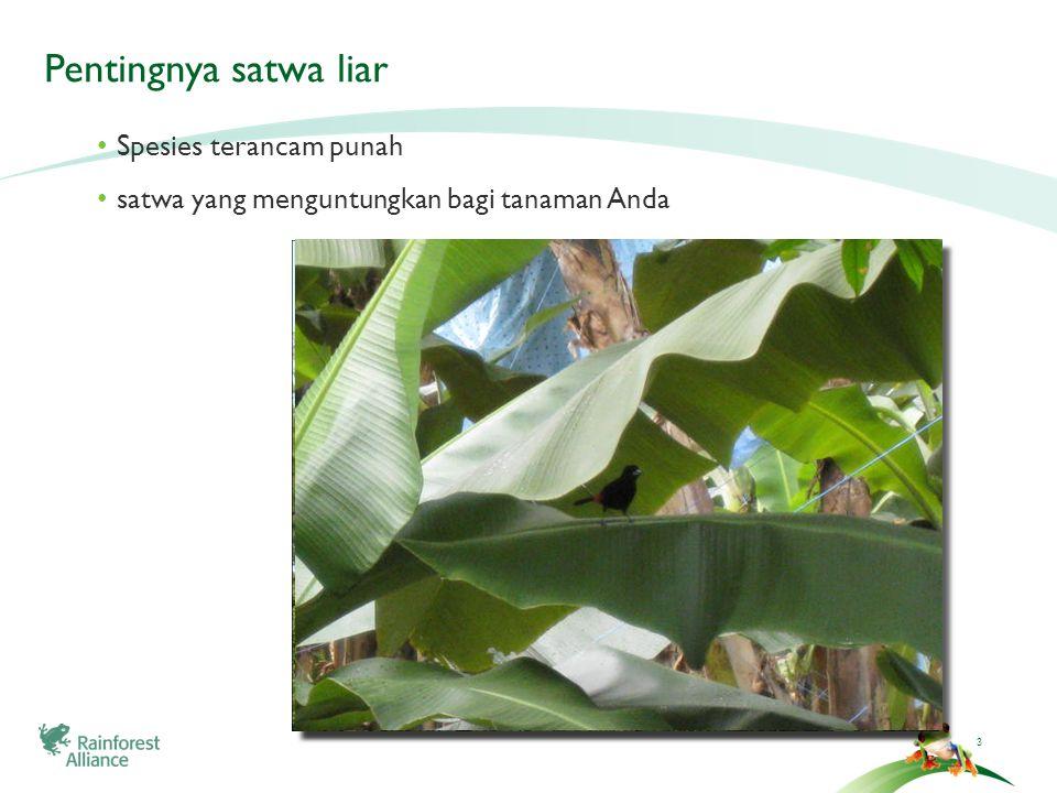 3 Pentingnya satwa liar Spesies terancam punah satwa yang menguntungkan bagi tanaman Anda