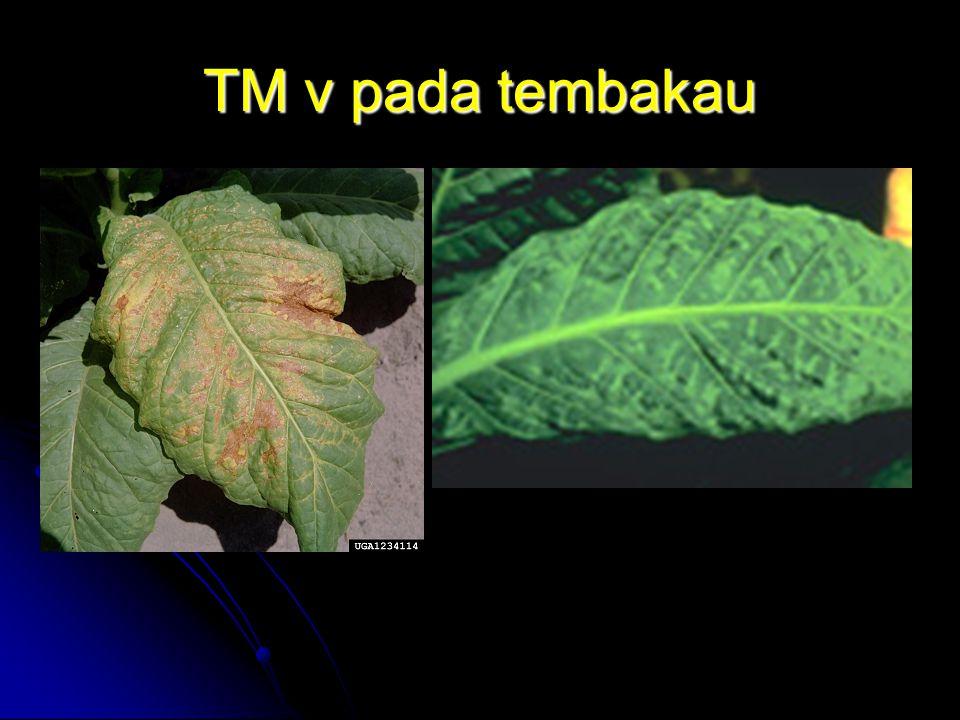 Tipe Morfologi Virus Helical Virus Helical Virus Protomer tunggal tersusun ulir seperti tangga spiral Ex: Tobacco Mosaic virus (TMv) Tobacco Mosaic virus (TMv)Tobacco Mosaic virus (TMv) Icosahedral Virus Icosahedral Virus Pola geometri teratur seperti bola sepak Ex: Hepatitis B virus Hepatitis B virusHepatitis B virus Enveloped Virus Enveloped Virus Memiliki capsid yang memiliki glycoprotein sebagai reseptor Ex: HIV HIV Complex Virus Complex Virus Memiliki capsid lebih kompleks dan ekor sebagai tempat perlekatan dengan sel Ex: Poxvirus & Bacteriophage Bacteriophage