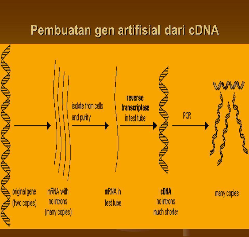 Pembuatan gen artifisial dari cDNA