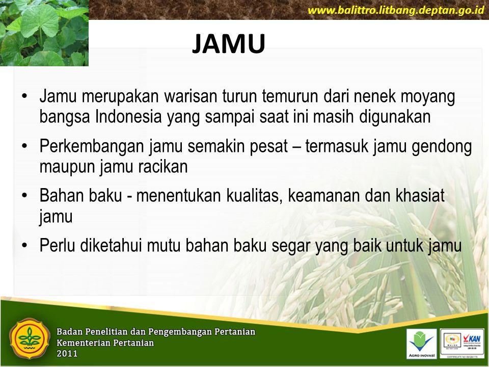 Jahe sebagai bahan baku obat Jahe Putih Kecil/Emprit: Acuan SNI 01-7087-2005 Rimpang dipanen dari tanaman yang sudah tua/masak fisiologis- daun sudah gugur.