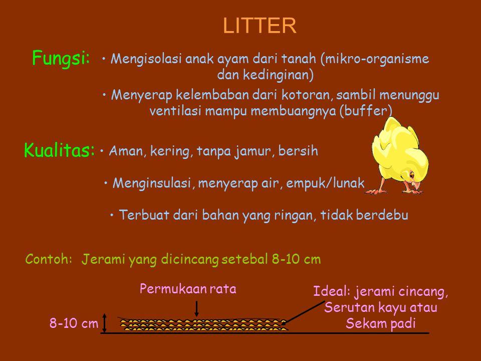 LITTER Fungsi: Mengisolasi anak ayam dari tanah (mikro-organisme dan kedinginan) Menyerap kelembaban dari kotoran, sambil menunggu ventilasi mampu membuangnya (buffer) Kualitas: Aman, kering, tanpa jamur, bersih Menginsulasi, menyerap air, empuk/lunak Terbuat dari bahan yang ringan, tidak berdebu Contoh:Jerami yang dicincang setebal 8-10 cm 8-10 cm Permukaan rata Ideal: jerami cincang, Serutan kayu atau Sekam padi
