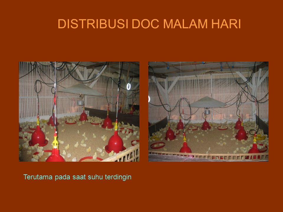 DISTRIBUSI DOC MALAM HARI Terutama pada saat suhu terdingin