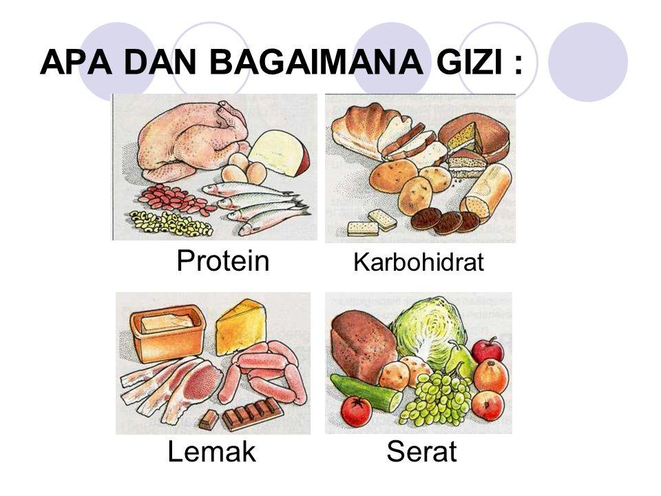 APA DAN BAGAIMANA GIZI : Protein Karbohidrat LemakSerat
