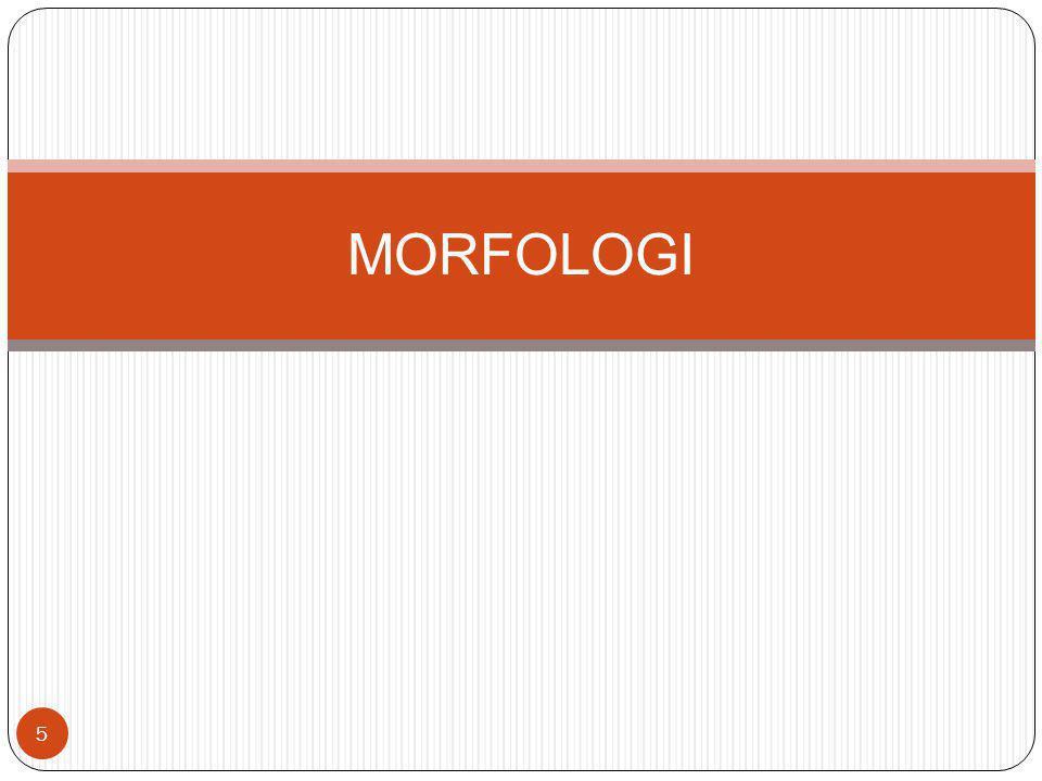 MORFOLOGI 5