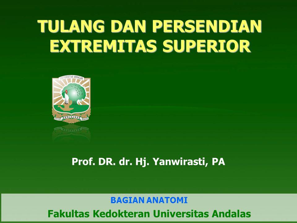 TULANG DAN PERSENDIAN EXTREMITAS SUPERIOR Prof. DR. dr. Hj. Yanwirasti, PA BAGIAN ANATOMI Fakultas Kedokteran Universitas Andalas