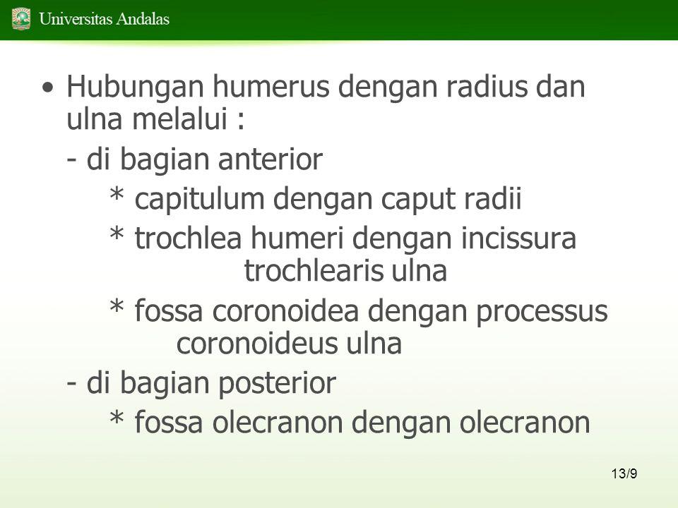 13/9 Hubungan humerus dengan radius dan ulna melalui : - di bagian anterior * capitulum dengan caput radii * trochlea humeri dengan incissura trochlearis ulna * fossa coronoidea dengan processus coronoideus ulna - di bagian posterior * fossa olecranon dengan olecranon
